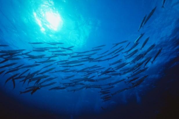 Innovation at axa innovating like fish schools for The fishing school