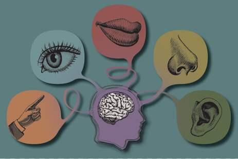the-five-senses-world-taste-visual-perception-5-senses