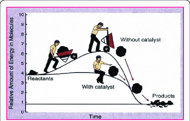 Diagram-representing-catalyst-lowering-the-activation-energy-thereby-accelerating-the