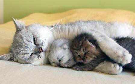 mamaandbabies-kittens
